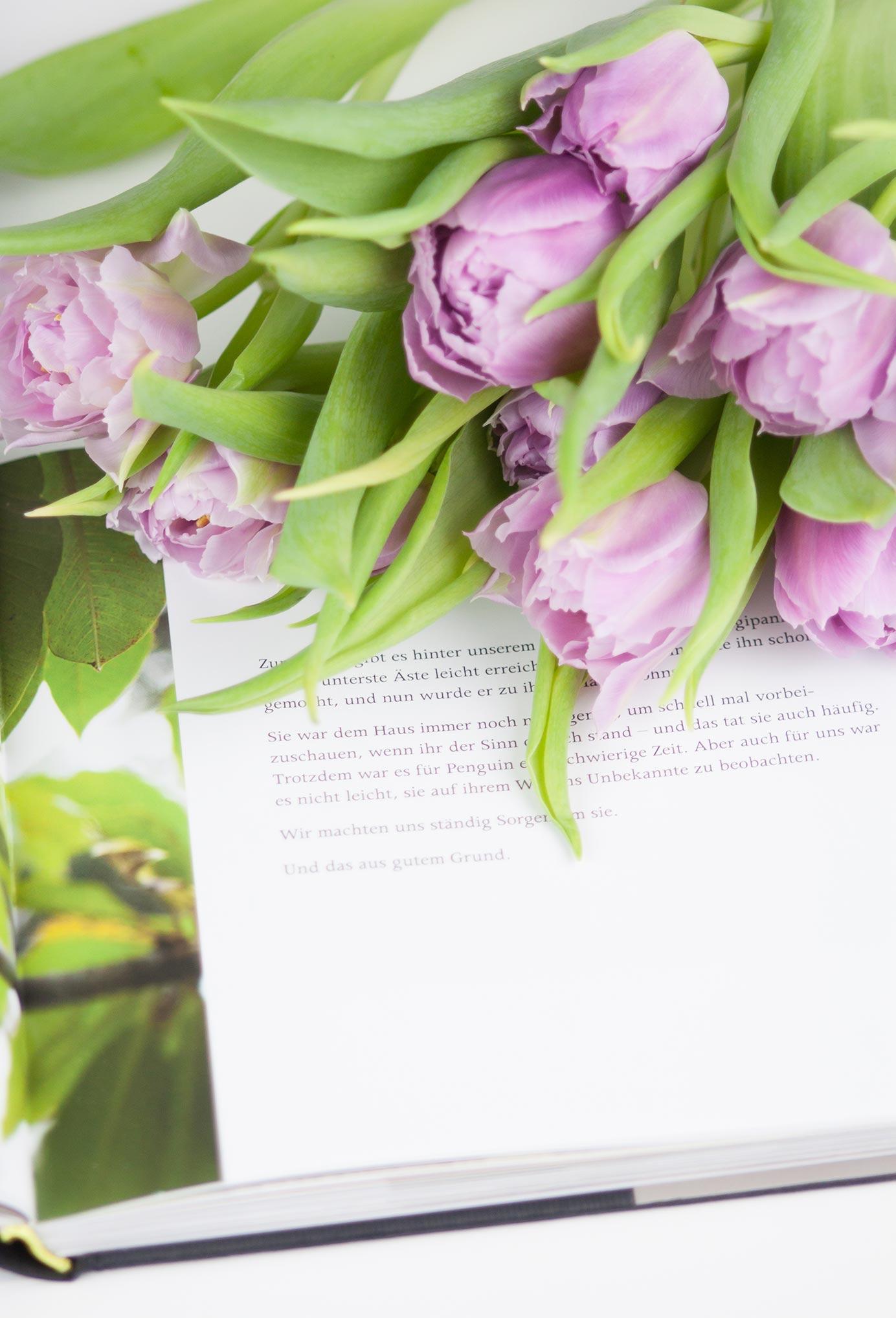 Penguin Bloom Buch Geschenktipp