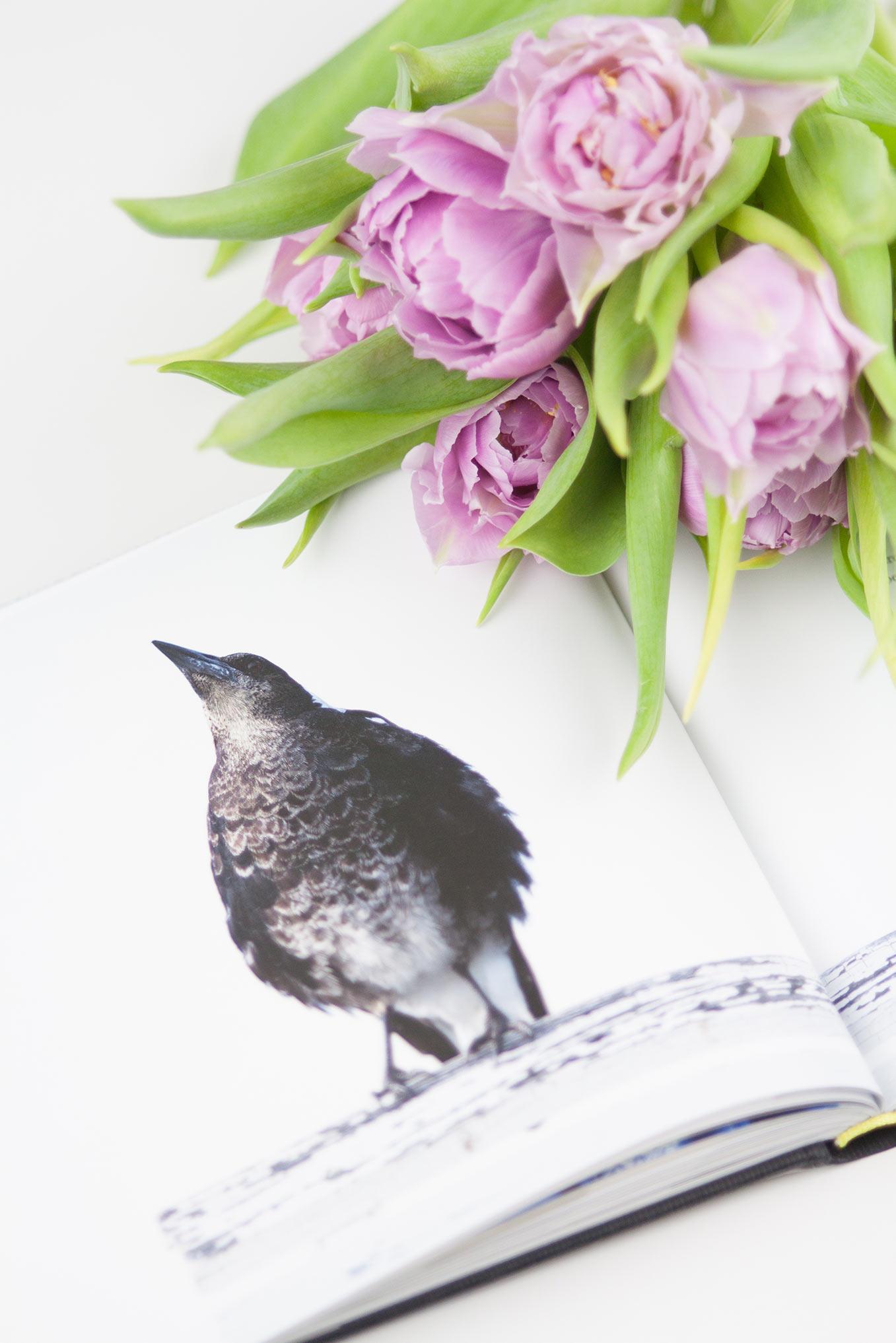 Buch Penguin Bloom
