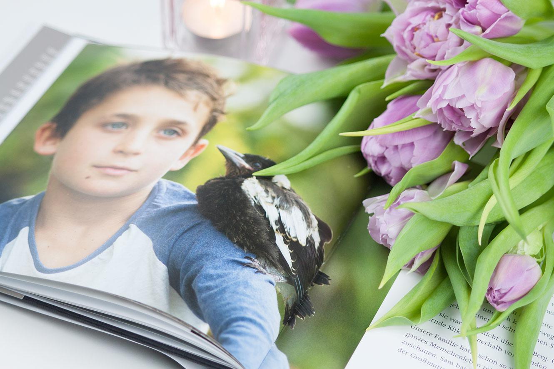 Penguin Bloom Buchempfehlung