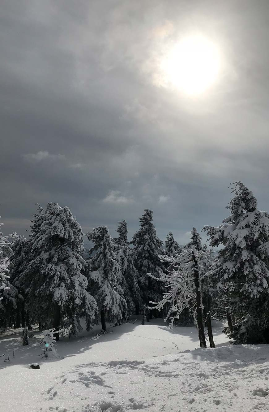 Harz Wandern im Winter