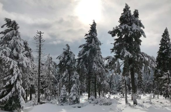 Kurztrip Harz Winter