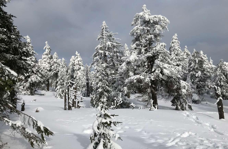 Kurzurlaub Harz Winter
