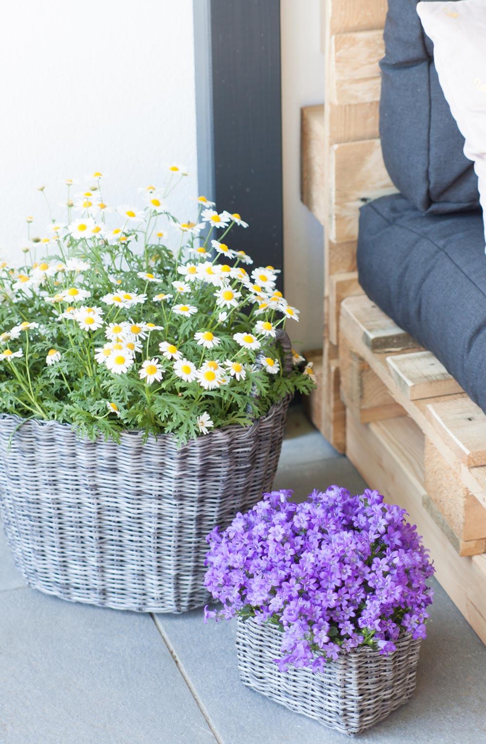 Korb Blumen Terrasse