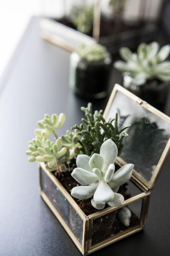 Mini Sukkulenten Ideen