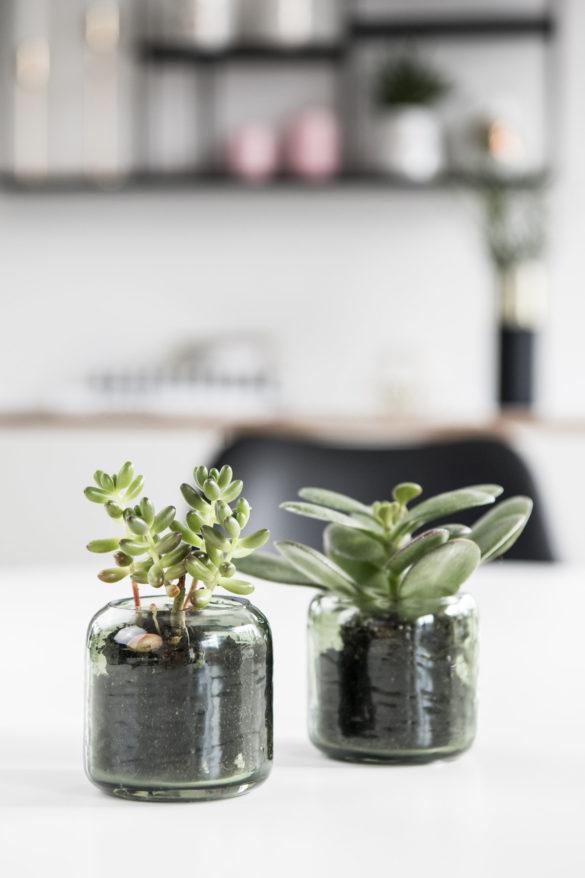 Styling Ideen für Sukkulenten
