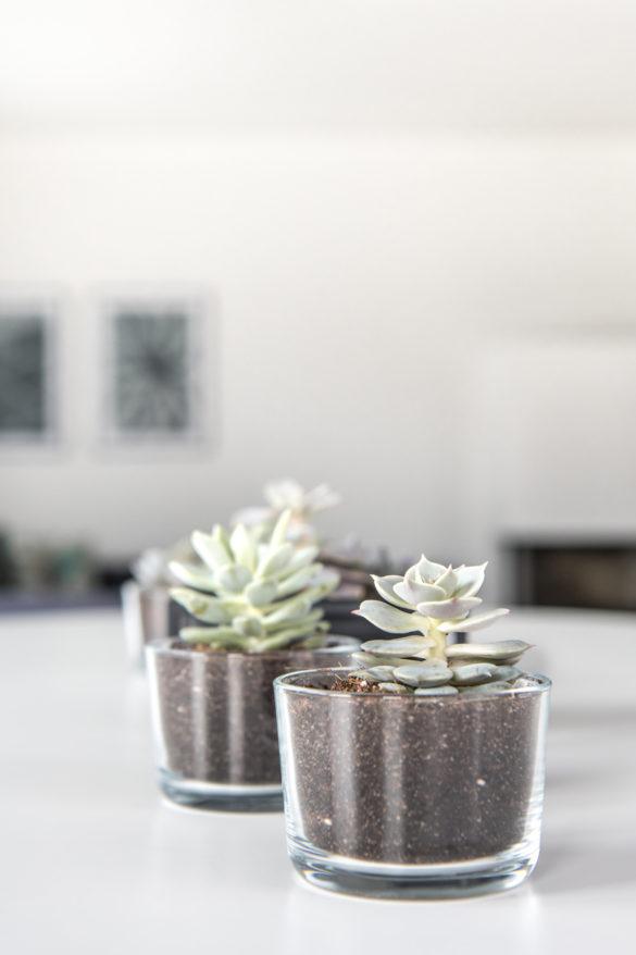 Sukkulente Echeveria im Trinkglas von Ikea 365+