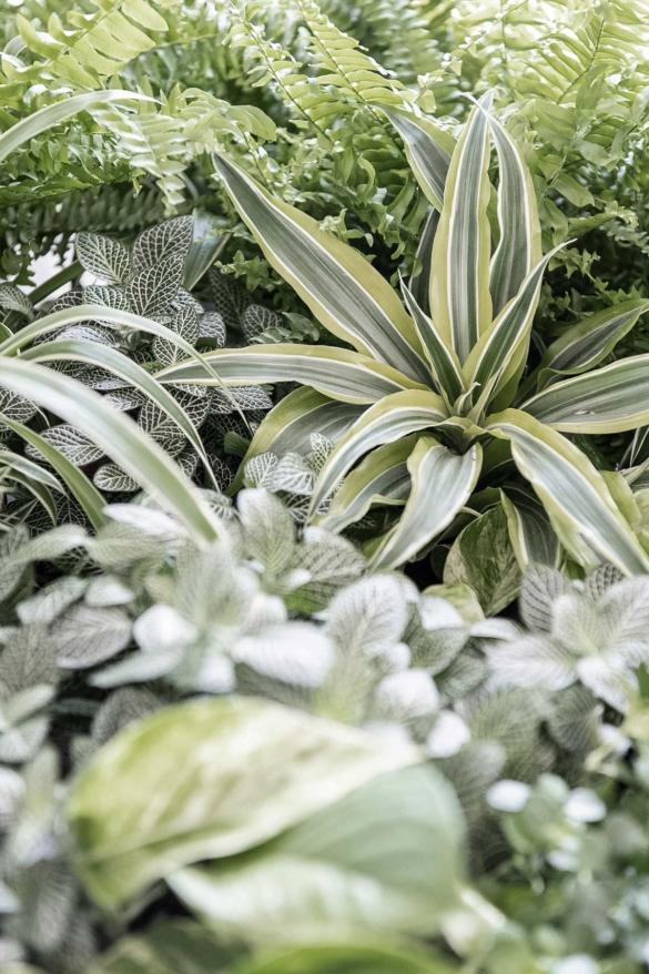 Urban Jungle Zimmerpflanzen