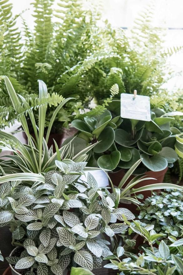 Pflanzen für Urban Jungle