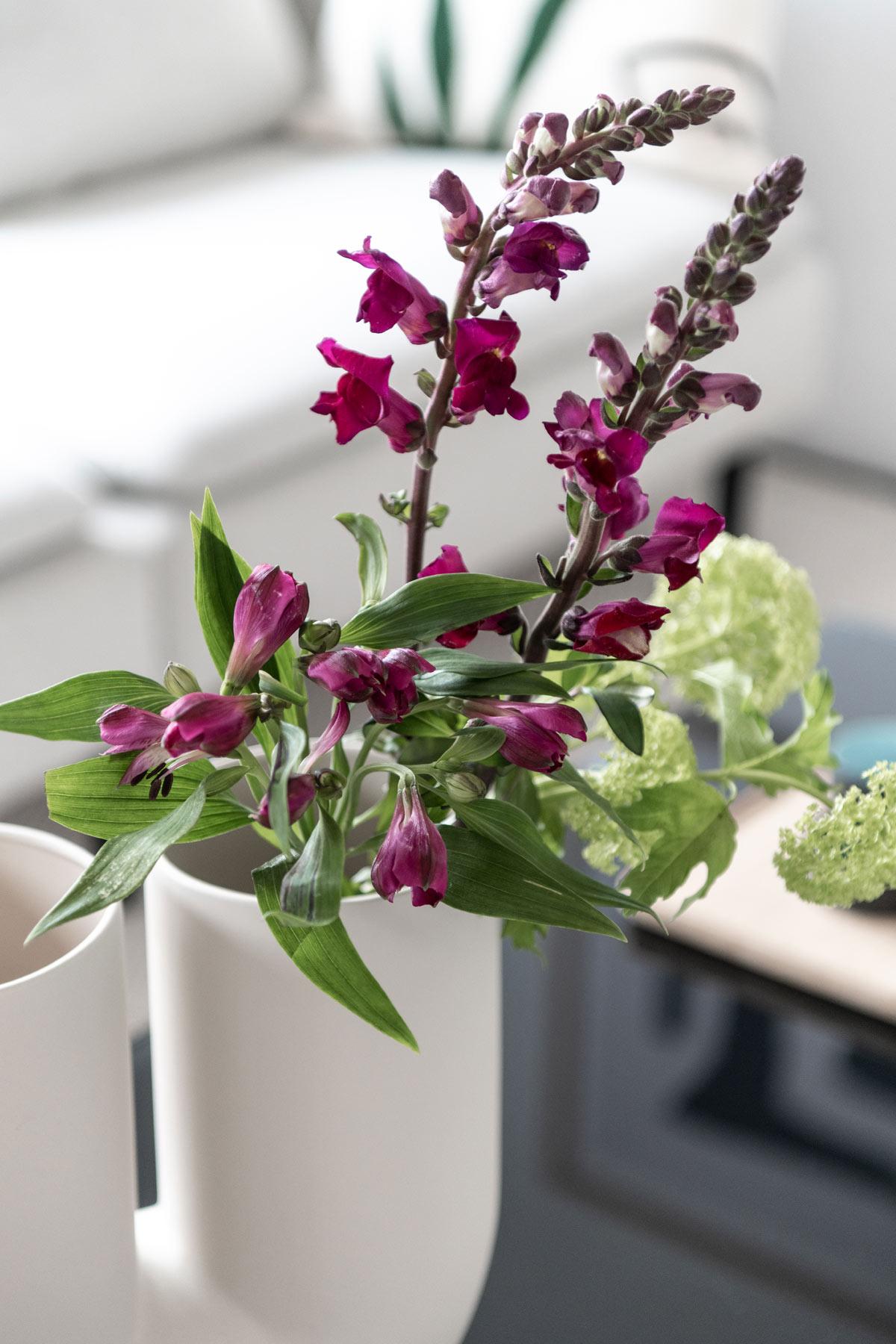 Löwenmäulchen in Vase